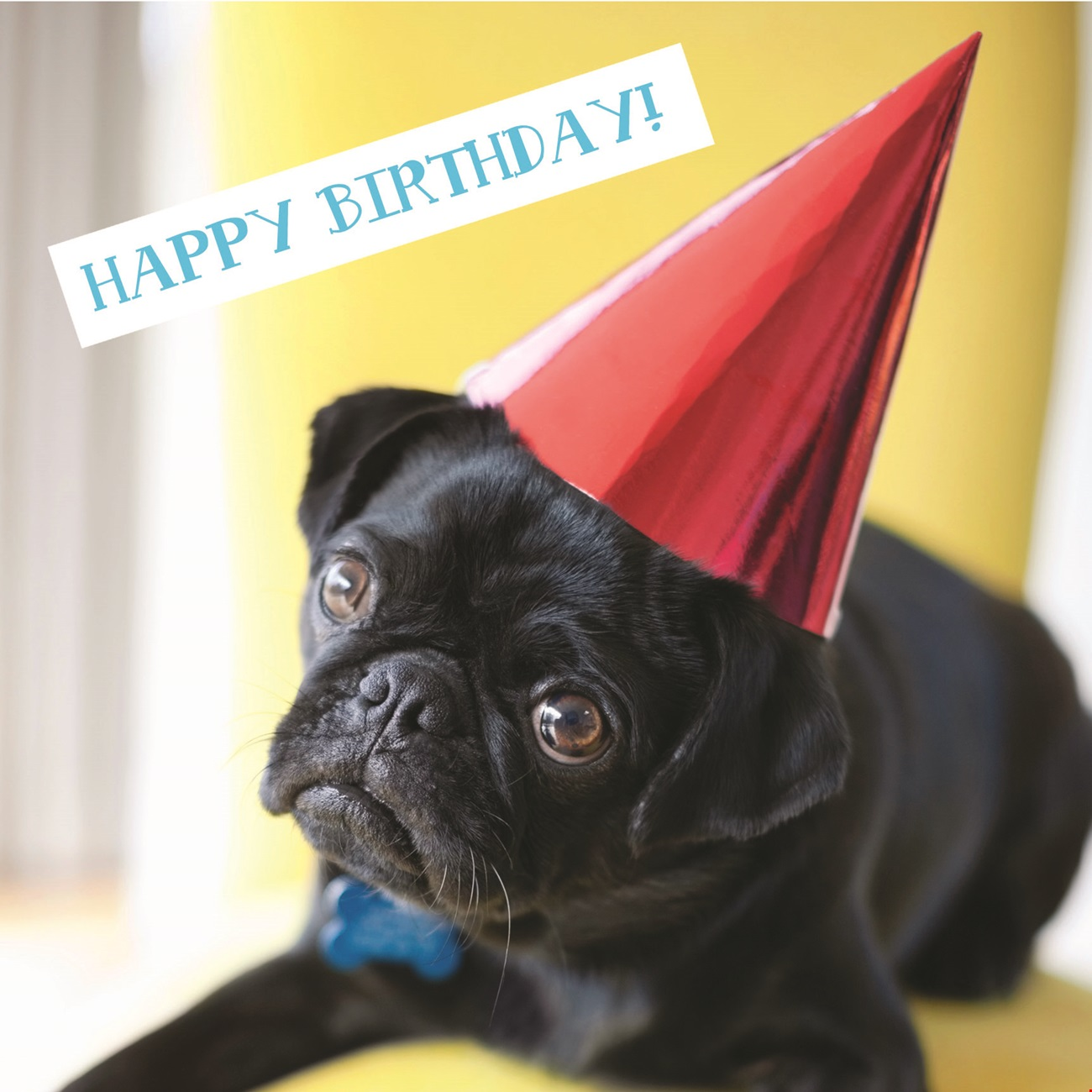 Party Pug Birthday Card